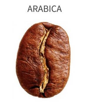 perbedaan arabica vs robusta