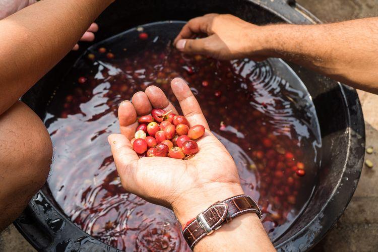 Proses seleksi kopi dalam metode washed process
